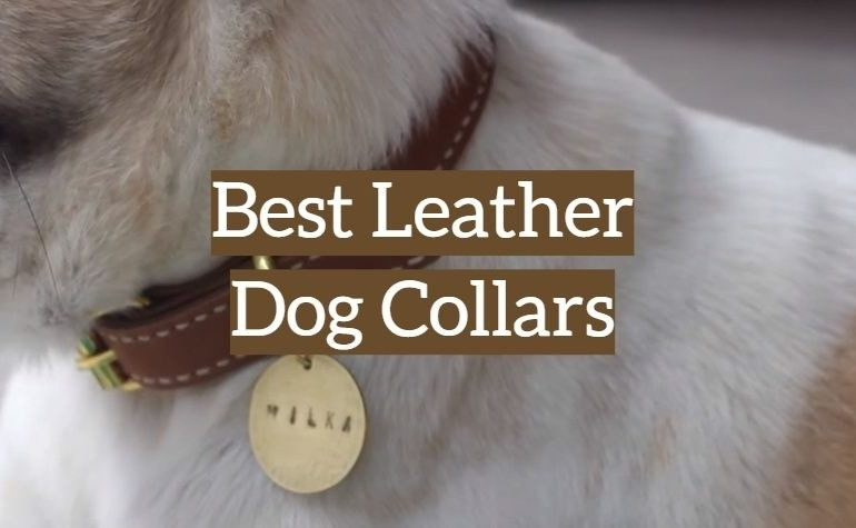 10 Best Leather Dog Collars