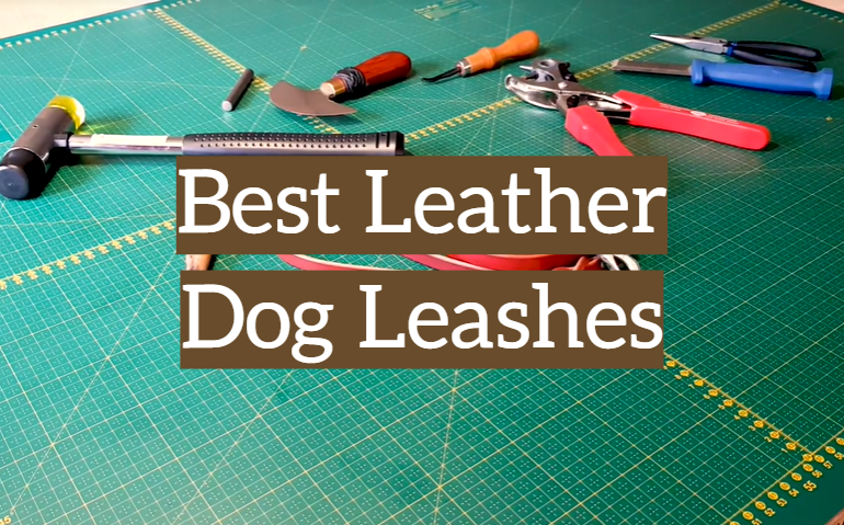 5 Best Leather Dog Leashes