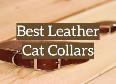 Best Leather Cat Collars