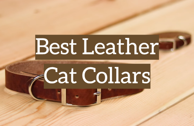 5 Best Leather Cat Collars