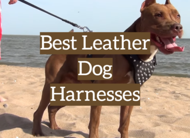 Best Leather Dog Harnesses