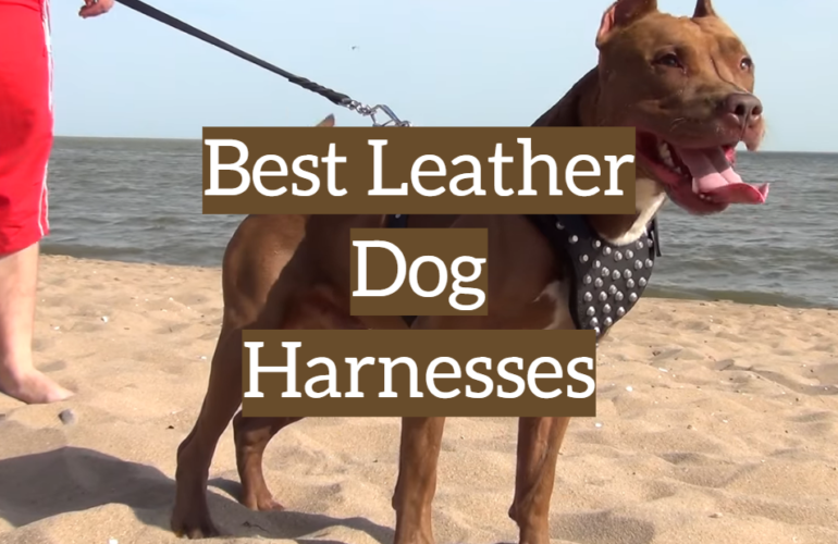 5 Best Leather Dog Harnesses
