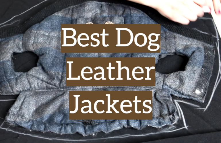 5 Best Dog Leather Jackets