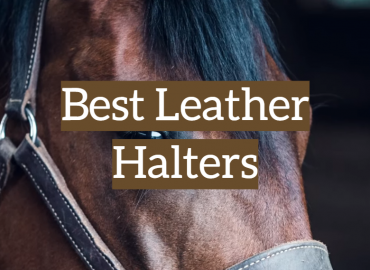 Best Leather Halters