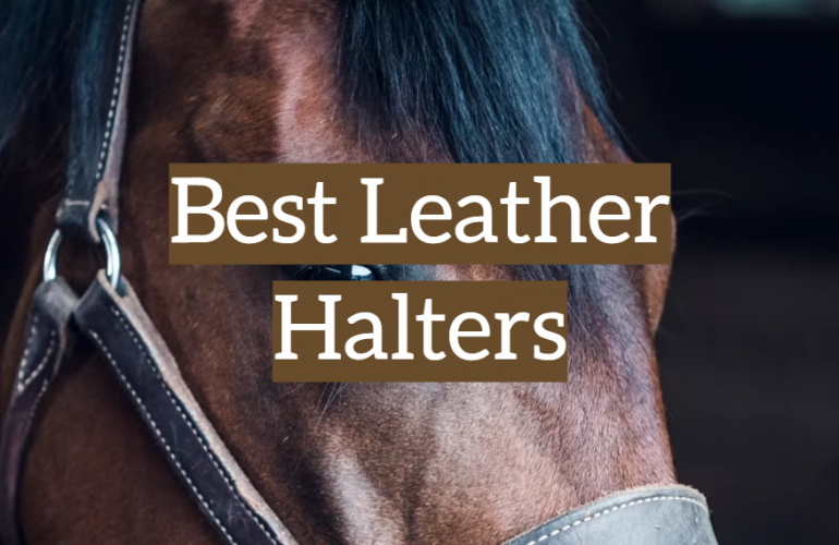 5 Best Leather Halters